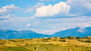 Vineyards in the Pirin mountain near Melnik Bulgaria.