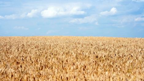 Wheat ukraine agriculture ebrd