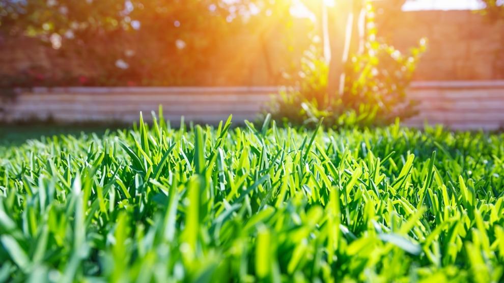 Beautiful view on cute backyard in sunny day, fresh green grass