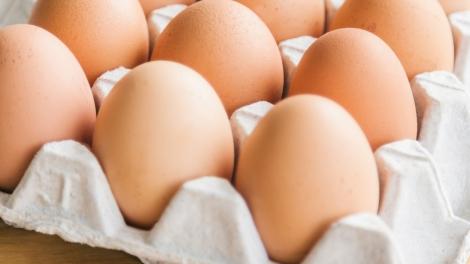 eggs in rack