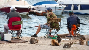 Varna Bulgaria - July 20 2014: Senior fishermen catch fish from the shore group of street cats waiting for haul