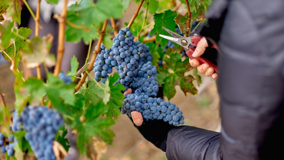 Moldovan wine heads west - Emerging Europe | News, Intelligence