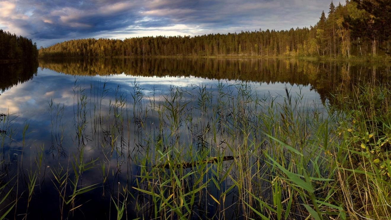 Aufbau von Druck auf die Umweltauswirkungen von Nord Stream 2