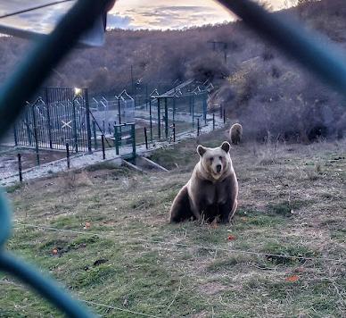 Prishtina Bear Sanctuary