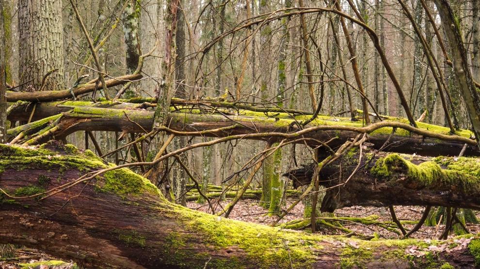 emerging europe Bialowieza Forest poland