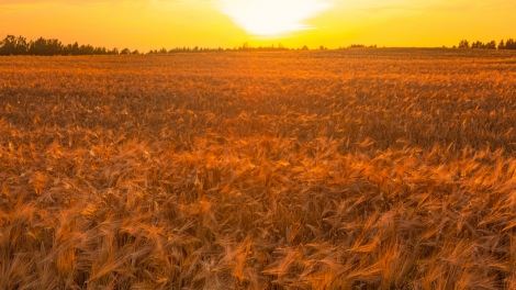 emerging europe wheat droughtt