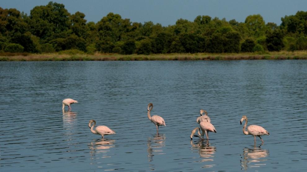 emerging europe albania pink flamingos