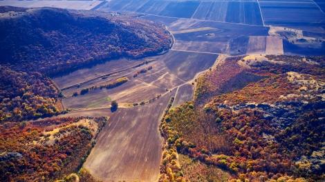 european green deal biodiversity