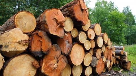timbeter forest management estonia start-up