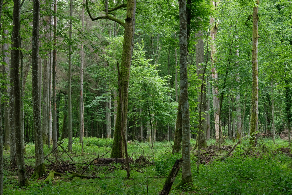 Emerging Europe's primeval forests are in danger - Emerging Europe