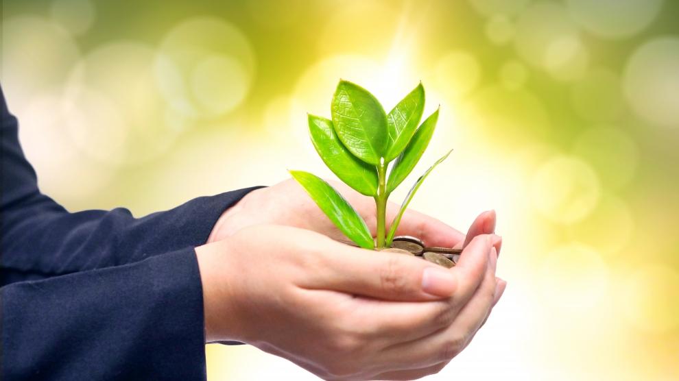 Vegan plant based