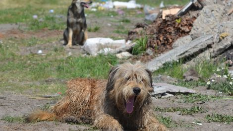 ukraine stray dogs